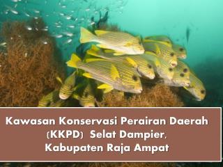 Kawasan Konservasi Perairan Daerah  (KKPD)   Selat  Dampier, Kabupaten  Raja  Ampat