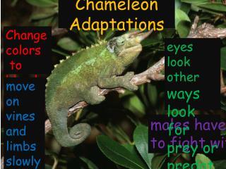 Chameleon  Adaptations