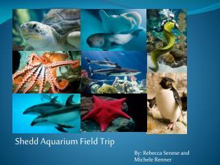Shedd  Aquarium Field Trip