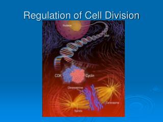 Regulation of Cell Division