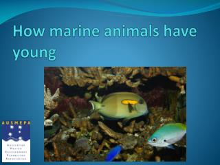 How marine animals have young