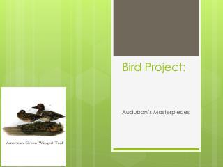 Bird Project: