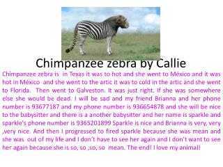 Chimpanzee zebra by Callie
