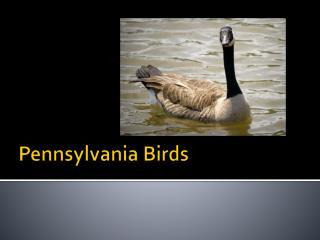 Pennsylvania Birds