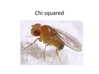 Chi squared
