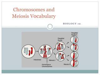 Chromosomes and Meiosis V oc abulary