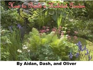 How to Build a Habitat Garden