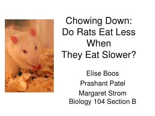 Chowing Down: Do Rats Eat Less When They Eat Slower?