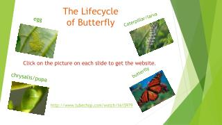 The Lifecycle of Butterfly