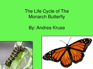 The Life Cycle of The Monarch Butterfly By: Andrea Kruse