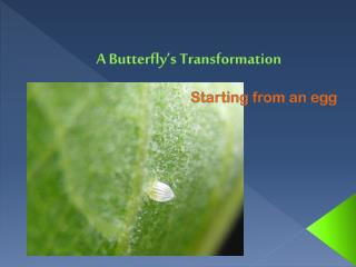 A Butterfly's Transformation