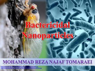 Bactericidal Nanoparticles