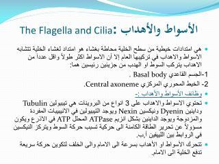 الأسواط والأهداب  The Flagella and Cilia :