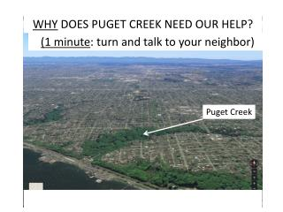 WHY  DOES PUGET CREEK NEED OUR HELP?