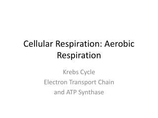 Cellular Respiration: Aerobic Respiration
