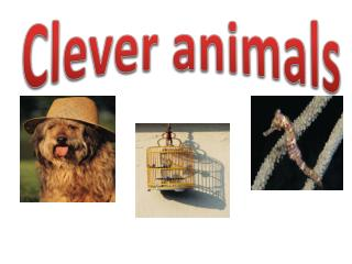 Clever animals