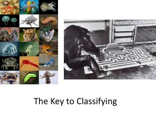 The Key to Classifying