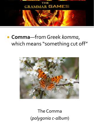 "Comma —from Greek  komma , which means ""something cut off"" The Comma  ( polygonia  c-album )"