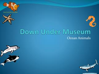 Down Under Museum