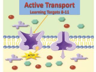 Active Transport Learning Targets 8-11