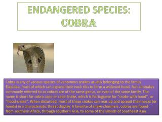 ENDANGERED SPECIES:  COBRA