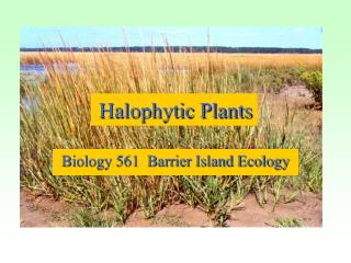 Halophytic Plants