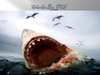 Sharks By JCI