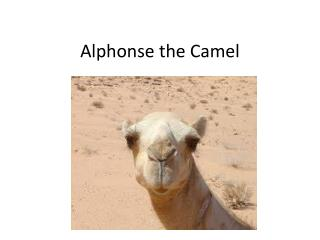 Alphonse the Camel