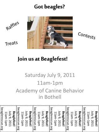 Got beagles?