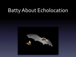 Batty About Echolocation