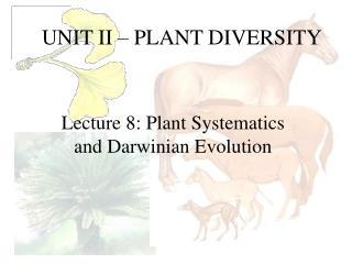 UNIT II   PLANT DIVERSITY