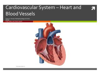 Cardiovascular System  –  Heart and Blood Vessels
