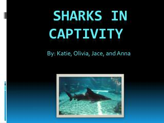 Sharks in captivity