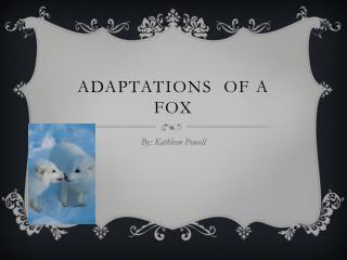 Adaptations  of a Fox