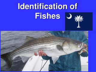 Identification of Fishes