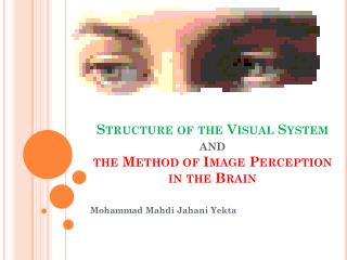 Structure of the Visual System  and  the Method of Image Perception in the Brain