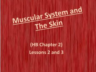 Muscular System and The Skin