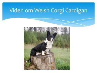 Viden om Welsh  Corgi  Cardigan