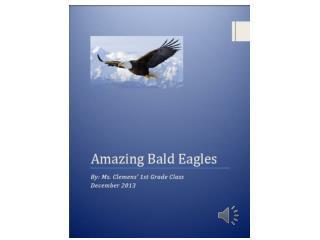 Amazing Bald Eagles