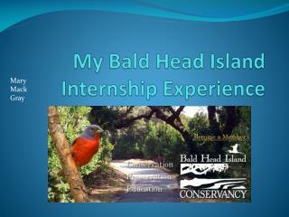 My Bald Head Island Internship Experience