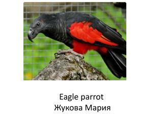 Eagle parrot  Жукова Мария