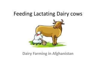 Feeding Lactating Dairy cows