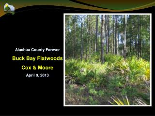 Alachua County Forever Buck Bay Flatwoods Cox & Moore April 9,  2013