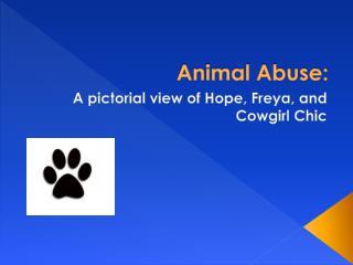 Animal Abuse: