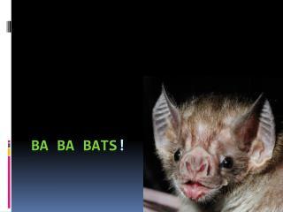 Ba  ba  bats !