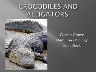 Crocodiles and Alligators.