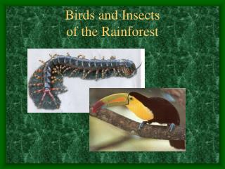 Birds and Insects of the Rainforest