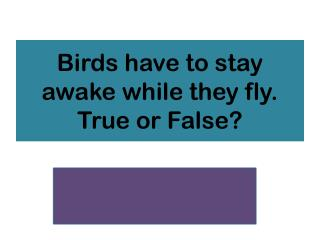 Birds have to stay awake while they fly. True or False?
