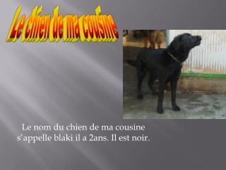 Le nom du chien de ma cousine s'appelle blaki il a 2ans. Il est noir.