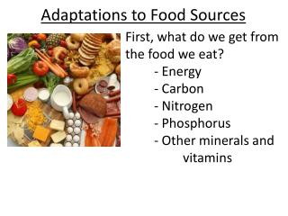 Adaptations to Food Sources